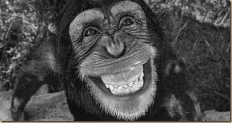 Scimpanze-r