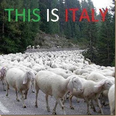 pecore gregge italia